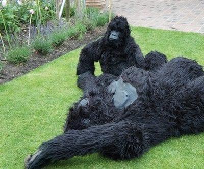 Gorillas 500